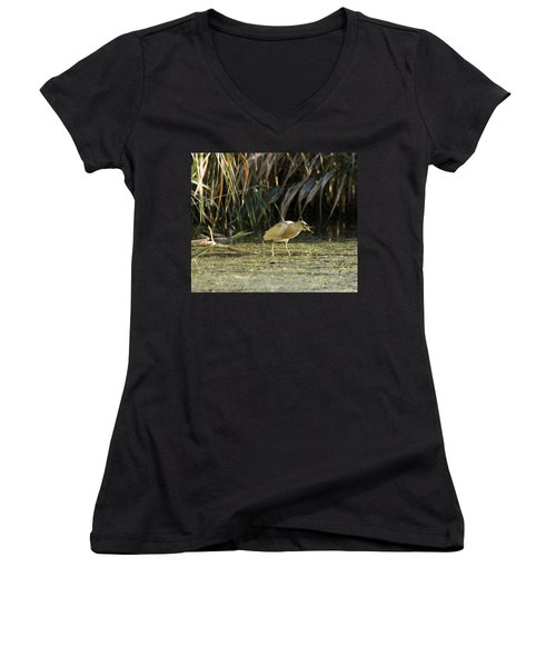 Feeding Squacco Heron Women's V-Neck