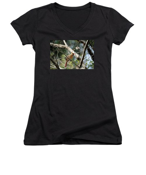 Women's V-Neck T-Shirt (Junior Cut) featuring the photograph Female Cardinal by Cathy Harper