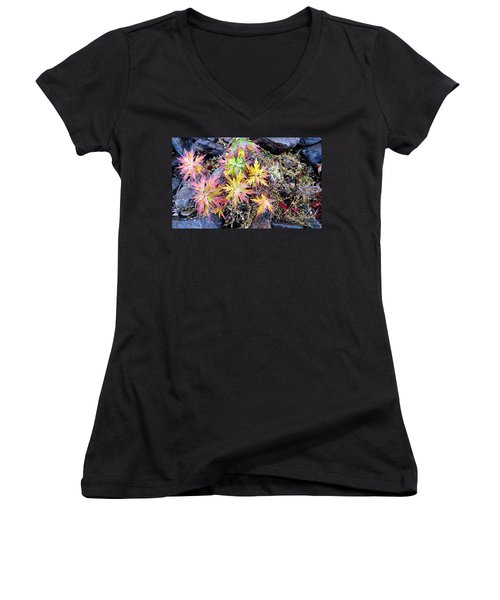 Ferns Women's V-Neck T-Shirt