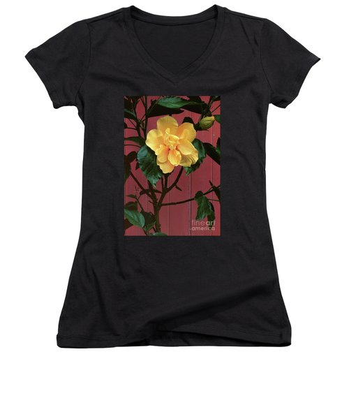 flower photographs - Yellow Rose Women's V-Neck (Athletic Fit)