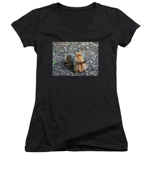 Fox Squirrel Breakfast Women's V-Neck