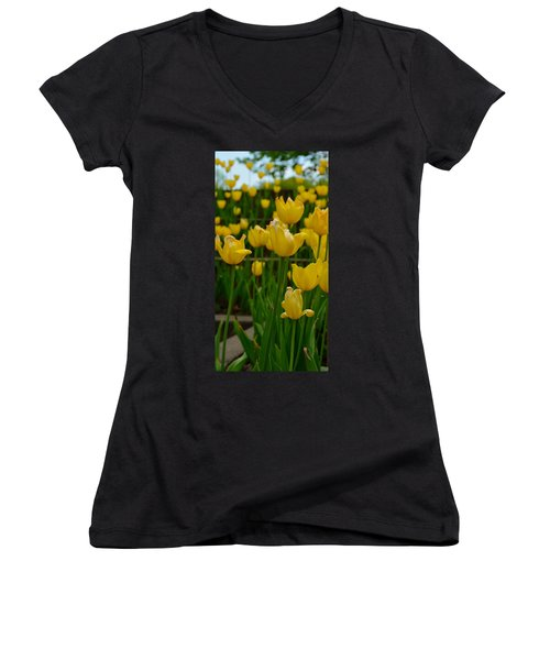 Grouping Of Yellow Tulips Women's V-Neck