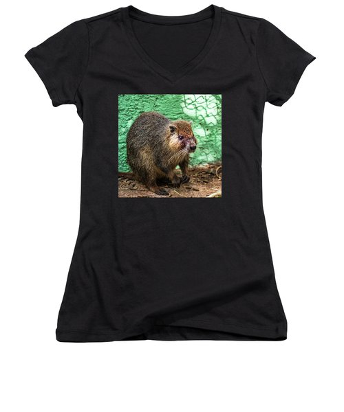 Hutia, Tree Rat Women's V-Neck (Athletic Fit)