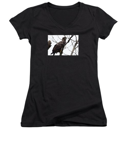 Women's V-Neck T-Shirt (Junior Cut) featuring the photograph Juvenile Eagle 2 by Steven Clipperton
