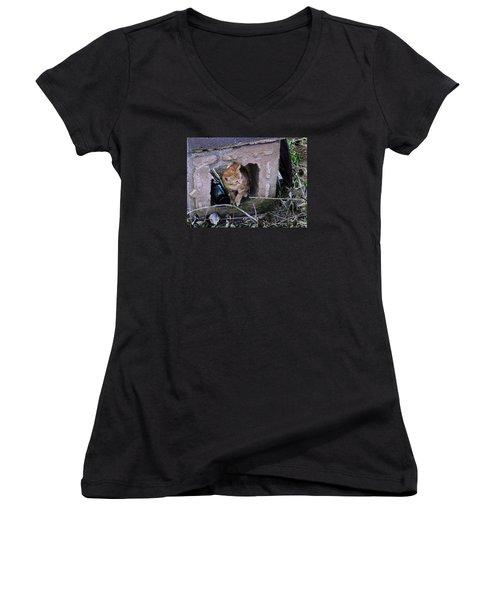 Kitten In The Junk Yard Women's V-Neck T-Shirt (Junior Cut) by Larry Capra