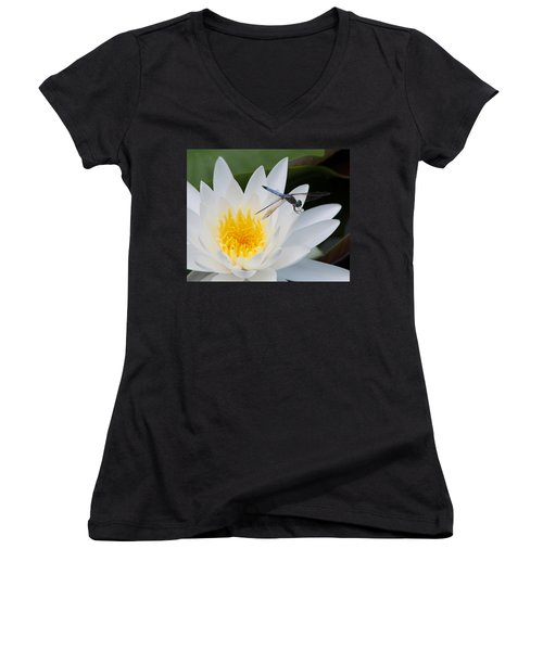 Lily And Dragonfly Women's V-Neck T-Shirt