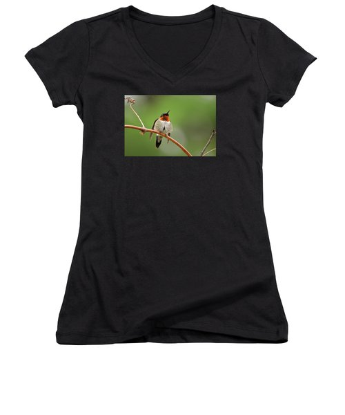 Male Ruby Throated Hummingbird Women's V-Neck T-Shirt