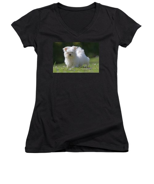 Maltese And Daisy Women's V-Neck (Athletic Fit)