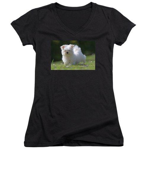 Maltese And Daisy Women's V-Neck T-Shirt