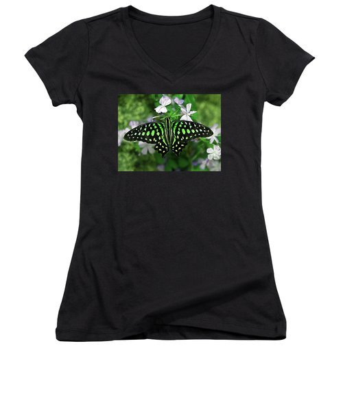 Neon --- Tailed Jay Butterfly Women's V-Neck (Athletic Fit)