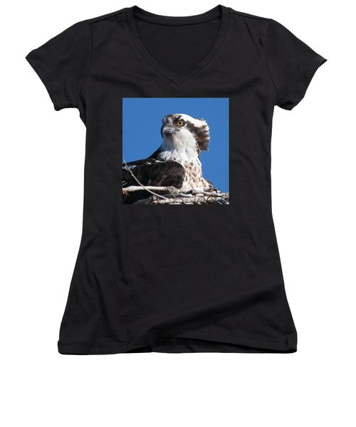 Nesting Osprey Women's V-Neck T-Shirt