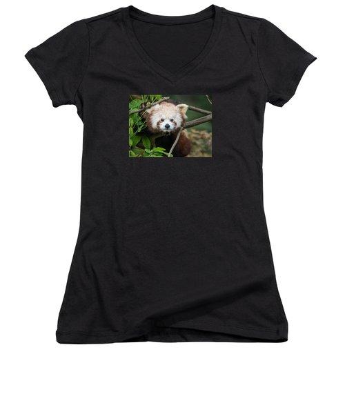 One Intense Critter Women's V-Neck T-Shirt (Junior Cut) by Greg Nyquist