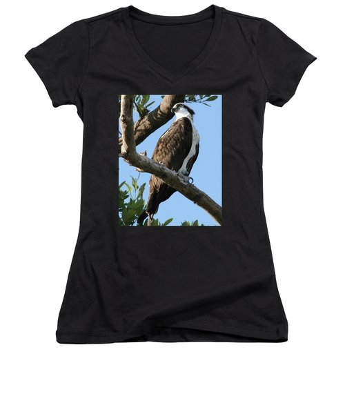 Osprey - Perched Women's V-Neck T-Shirt