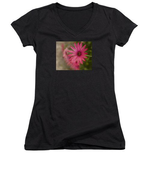 Women's V-Neck T-Shirt (Junior Cut) featuring the photograph Osteospermum The Cape Daisy by Shirley Mitchell