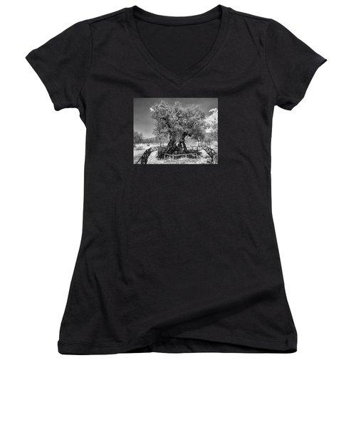 Patriarch Olive Tree Women's V-Neck T-Shirt (Junior Cut) by Alan Toepfer