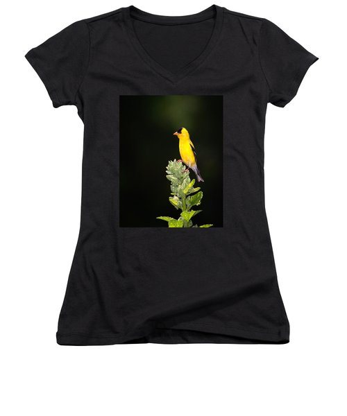 Perched American Goldfinch Women's V-Neck
