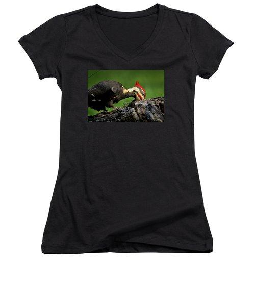 Pileated 3 Women's V-Neck T-Shirt (Junior Cut) by Douglas Stucky