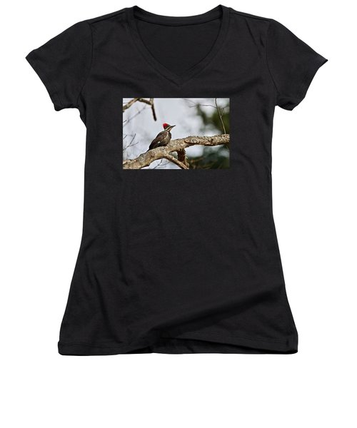 pileated Woodpecker 1068  Women's V-Neck T-Shirt (Junior Cut) by Michael Peychich