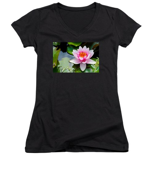Pink Waterlily Women's V-Neck T-Shirt (Junior Cut) by Daniel Precht