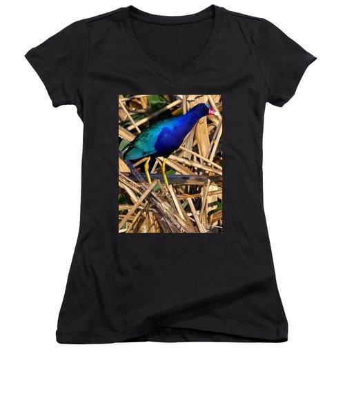 Purple Galinule 002 Women's V-Neck T-Shirt (Junior Cut) by Chris Mercer