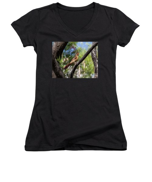 Pyrrhuloxia At Work Women's V-Neck