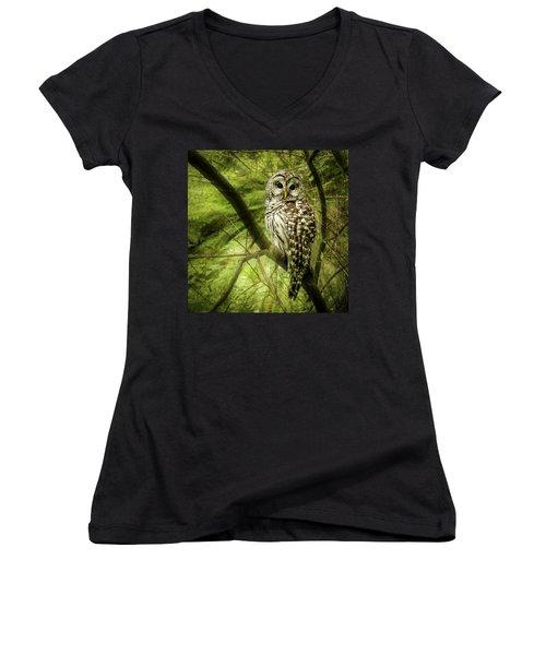 Radiating Barred Owl Women's V-Neck T-Shirt (Junior Cut) by Jean Noren