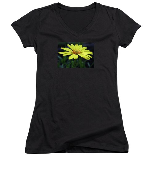 Women's V-Neck T-Shirt (Junior Cut) featuring the photograph Raindrops On Daisy by Judy Vincent