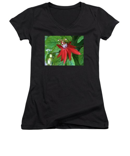 Women's V-Neck T-Shirt (Junior Cut) featuring the photograph Red Passion by Marna Edwards Flavell