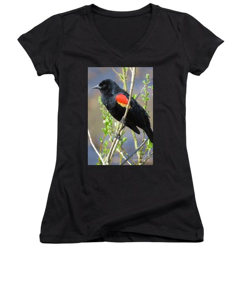 Red-winged Perch Women's V-Neck T-Shirt