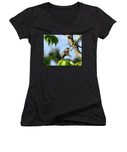 Resting Hummingbird Women's V-Neck T-Shirt