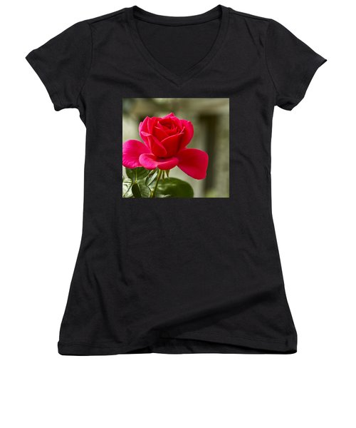 Red Rose Wall Art Print Women's V-Neck T-Shirt (Junior Cut) by Carol F Austin