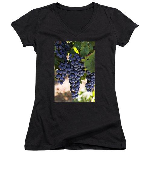 Sauvignon Grapes Women's V-Neck T-Shirt (Junior Cut) by Garry Gay