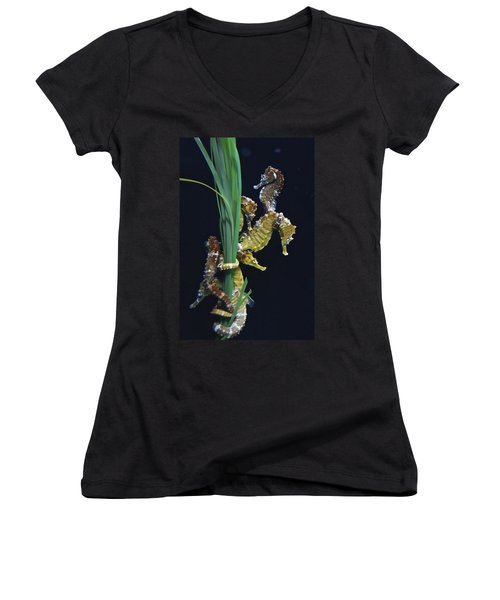Women's V-Neck T-Shirt featuring the photograph Sea Horse by Joan Reese