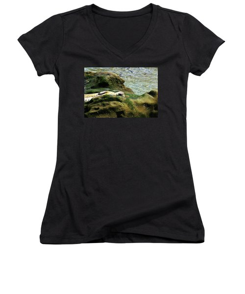 Women's V-Neck T-Shirt (Junior Cut) featuring the photograph Seal On The Rocks by Anthony Jones