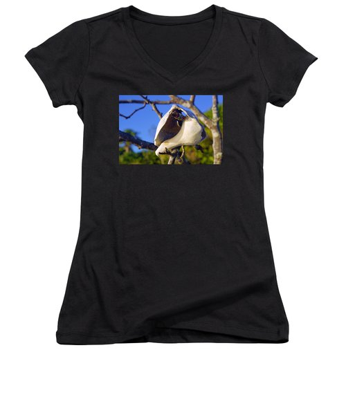 Shell On Brach Of Mangrove Tree At Barefoot Beach In Napes, Fl Women's V-Neck