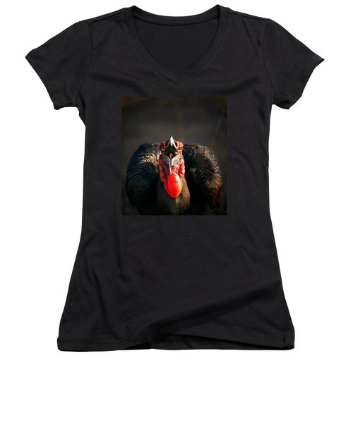 Southern Ground Hornbill Swallowing A Seed Women's V-Neck T-Shirt (Junior Cut) by Johan Swanepoel