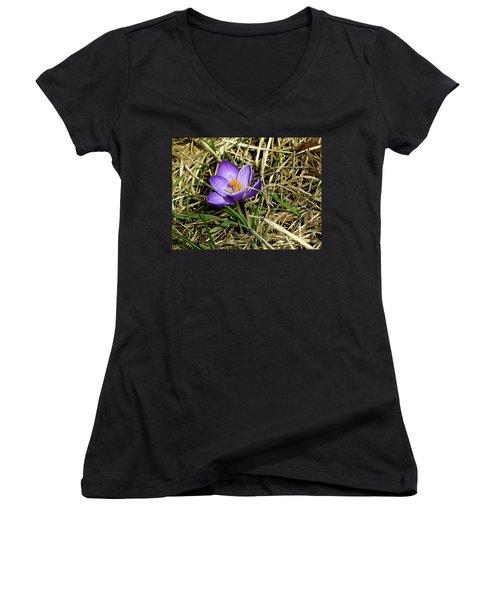Spring Crocus Women's V-Neck T-Shirt