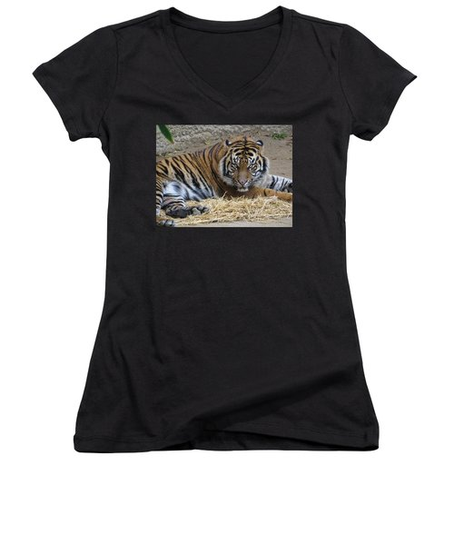 Staring Tiger Also Women's V-Neck T-Shirt