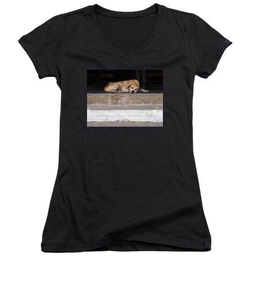 Women's V-Neck featuring the photograph Street Dog Sleeping On Steps by Karen Zuk Rosenblatt