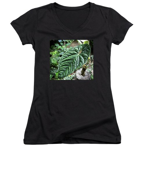 Texture Of A Leaf Women's V-Neck