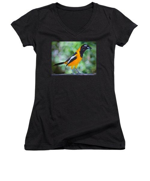 The Troupial Women's V-Neck T-Shirt (Junior Cut) by Judy Kay