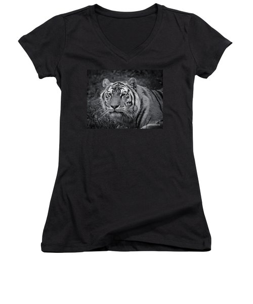 Tiger In The Grass Women's V-Neck T-Shirt (Junior Cut) by Darcy Michaelchuk