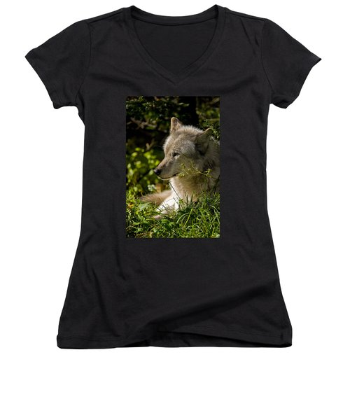 Women's V-Neck T-Shirt (Junior Cut) featuring the photograph Timber Wolf Portrait by Michael Cummings