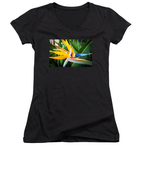 Tropical Closeup Women's V-Neck
