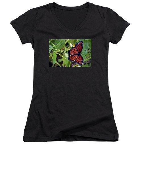 Viceroy Butterfly Women's V-Neck