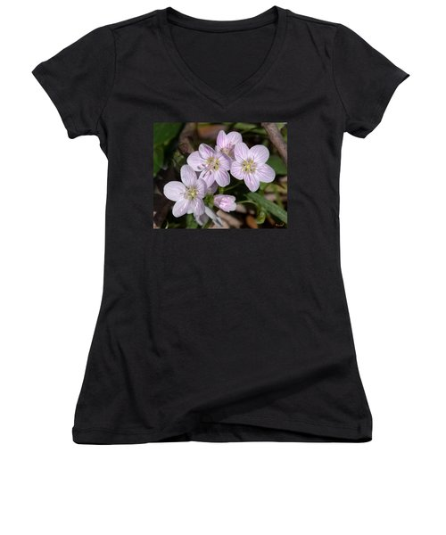 Virginia Or Narrowleaf Spring-beauty Dspf041 Women's V-Neck T-Shirt