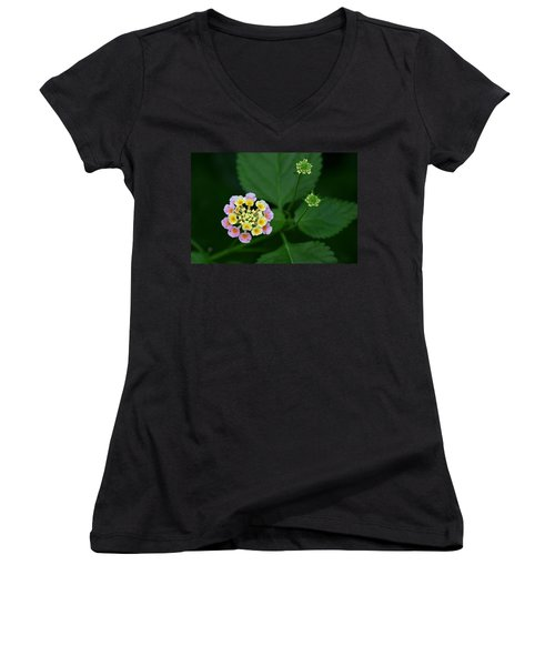 Waiting Their Turn Women's V-Neck T-Shirt (Junior Cut) by Shari Jardina