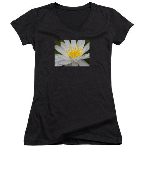 Water Lily Women's V-Neck T-Shirt (Junior Cut)