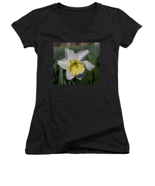 White And Yellow Daffodil Women's V-Neck