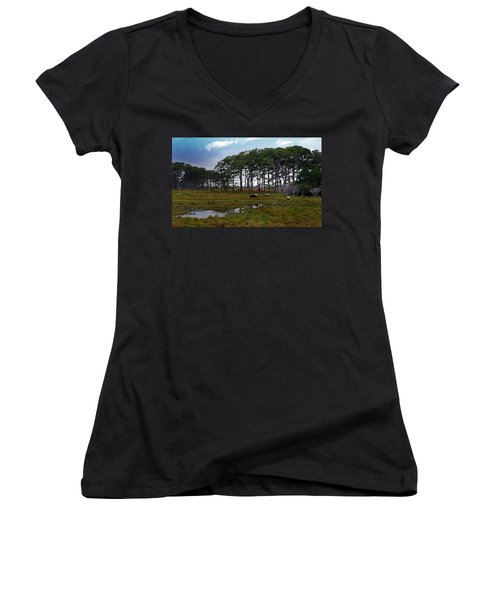 Wild Ponies Of Assateague Women's V-Neck T-Shirt (Junior Cut)